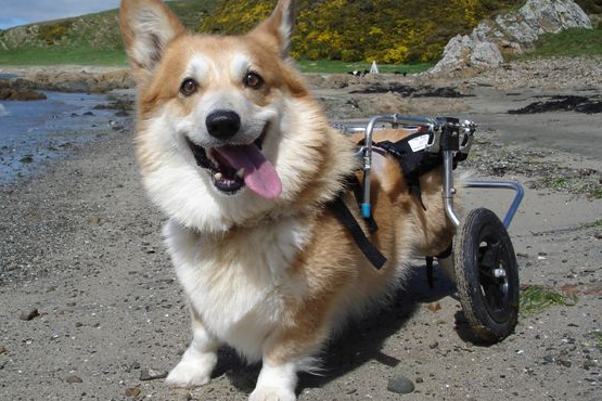 dog wheelchair product image