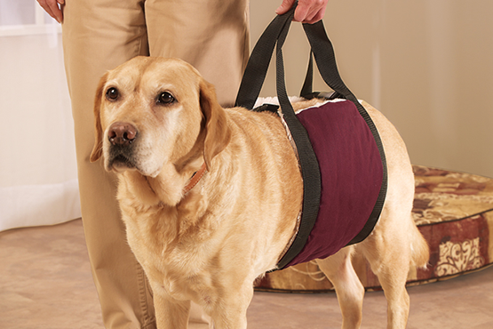 dog with support sling