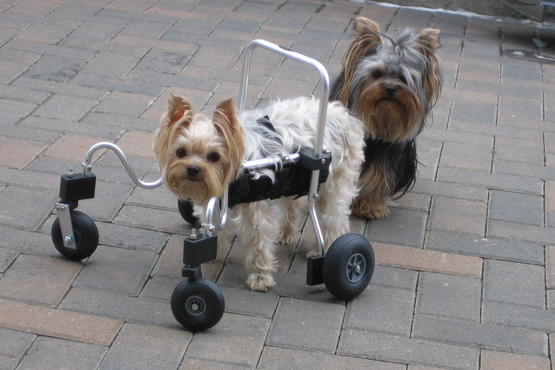 dog with front support wheelchair