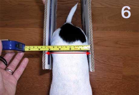 Measurement 6